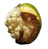 walnut processing line